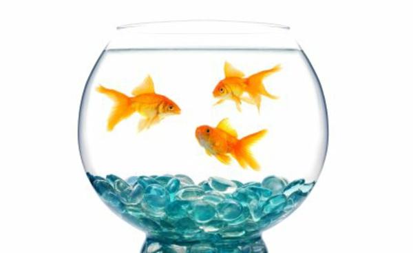 aquarium-design-simple-bel