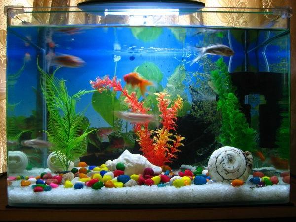 aquarium design pas cher avec dragees