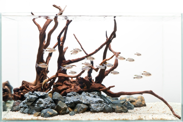 aquarium-design-simple-branches