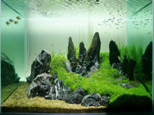aquarium-design-simple-eau-salee