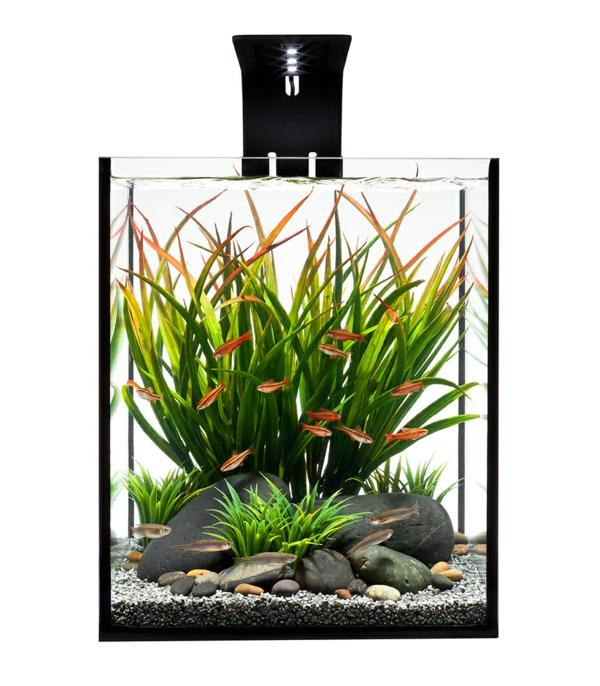 aquarium-design-simple-ecotoxique