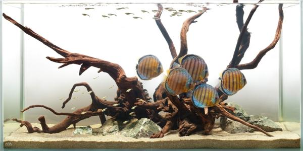 aquarium-design-simple-exotique