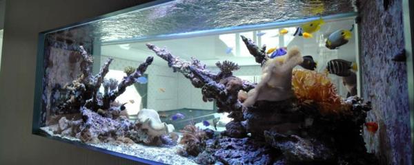 aquarium-design-simple-ocean