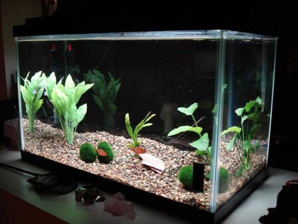 aquarium-design-simple-plantes