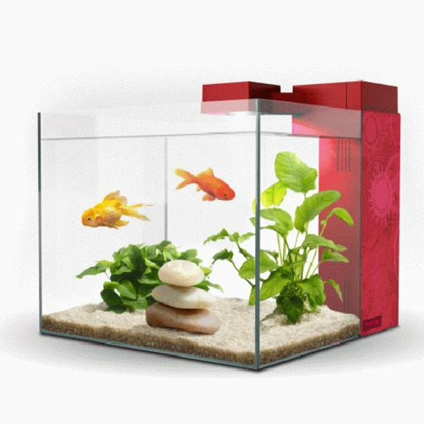 Un aquarium design pas cher quelques id es en photos for Aquarium poisson rouge avec pompe