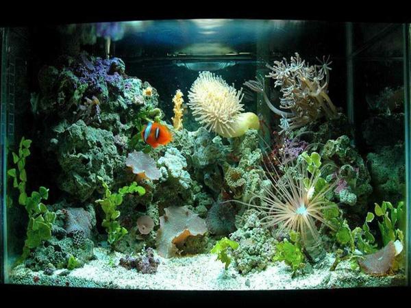 aquarium design pas cher avec plantes