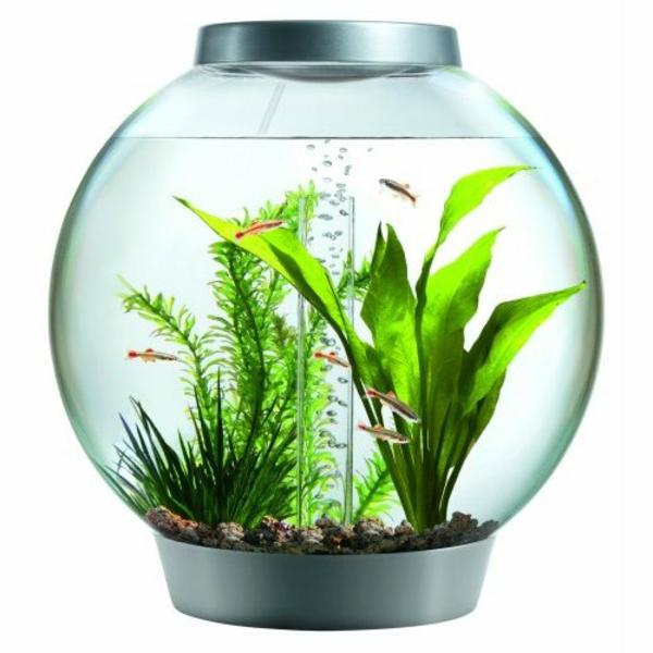 aquarium-design-simple-poissons-plantes