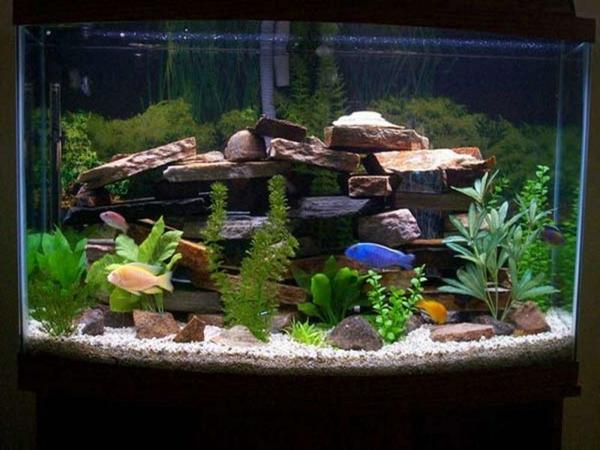... aquarium design pas cher et que vous avez trouve des idees
