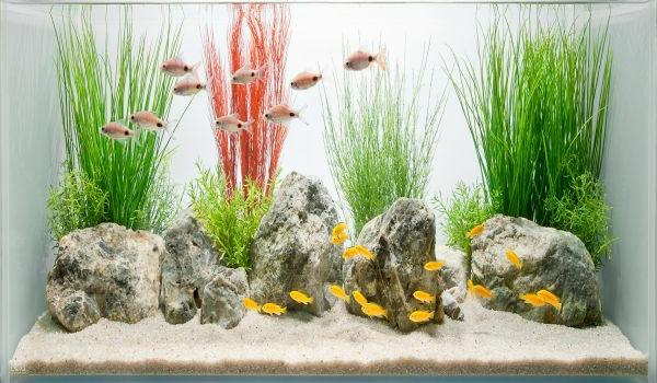 aquarium-design-simple