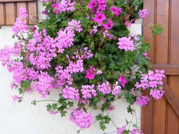 Choisir une plante pour jardini re quelques id es et astuces for Jardiniere double pour balcon