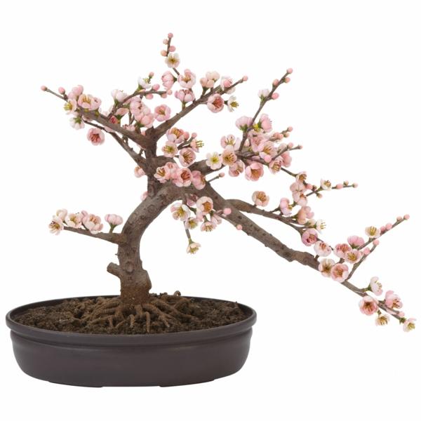 bonsai-arbre-cerisier-fleurs