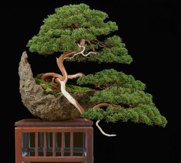 bonsai-arbre-design-pots