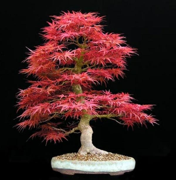 bonsai-arbre-elegant
