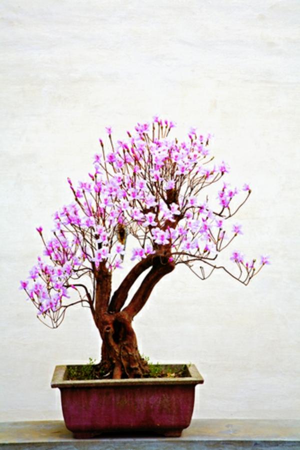 bonsai-arbre-fleurs-roses