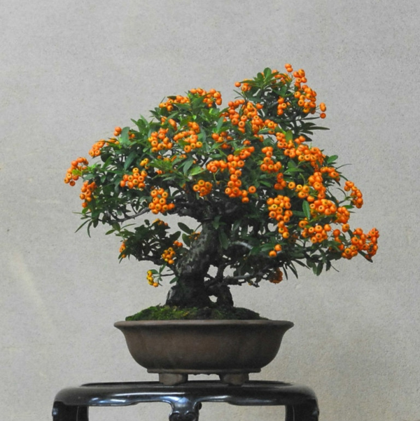 bonsai-arbre-interieur-7
