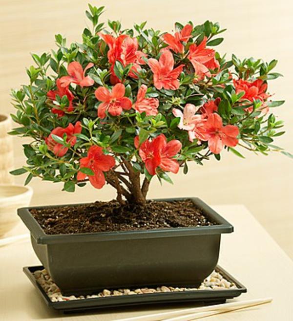 Un arbre bonsai la d coration par excellence pour l for Arbre decoratif interieur