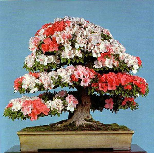 bonsai-arbre-interieur-fleurs