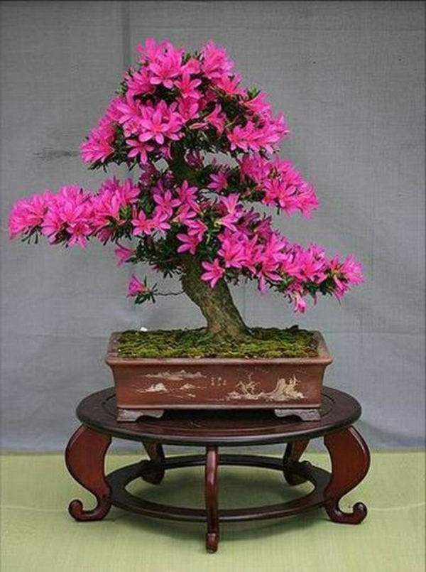 bonsai-fleurs-en-couleurs