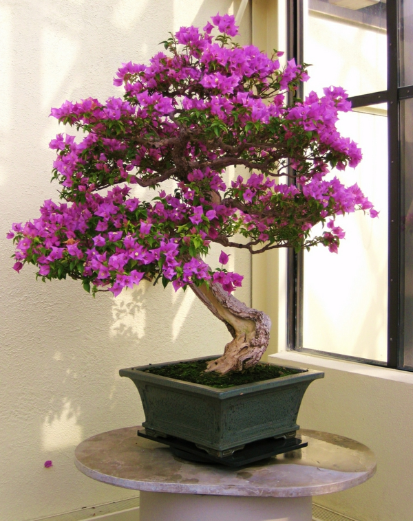 Un arbre bonsai la d coration par excellence pour l for Bonsai de jardin
