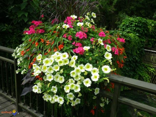 Choisir une plante pour jardini re quelques id es et for Composition jardiniere exterieure