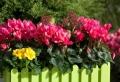 Choisir une plante pour jardinière – quelques idées et astuces