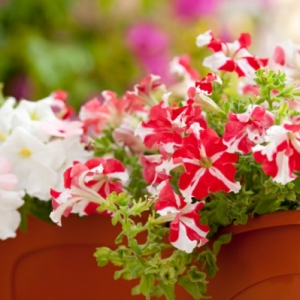 Choisir une plante pour jardinière - quelques idées et astuces