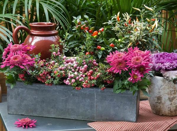 Choisir une plante pour jardini re quelques id es et for Jardiniere d hiver