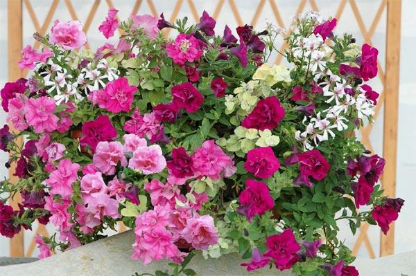jardiniere-fleurie-zoom-resized