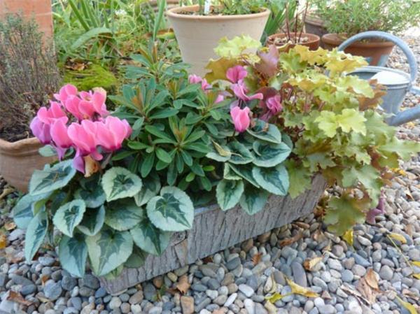 jardiniere-mini-cyclamas-automne-resized