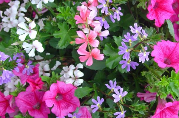 jardiniere-mix-resized