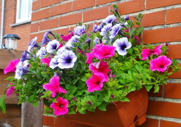 jardiniere-petunia-resized