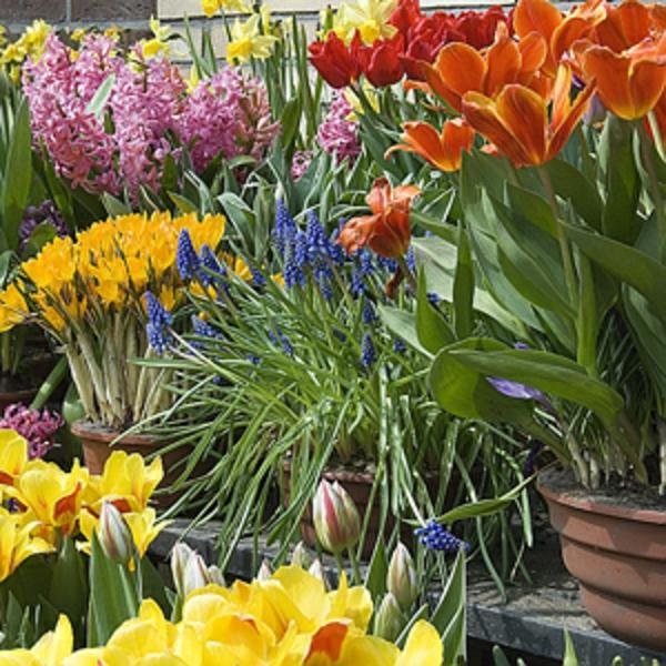 jardiniere-plantes-printanieres-resized