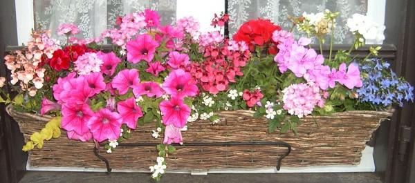 jardiniere-plantes-resized