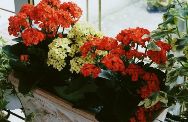jardiniere-resized