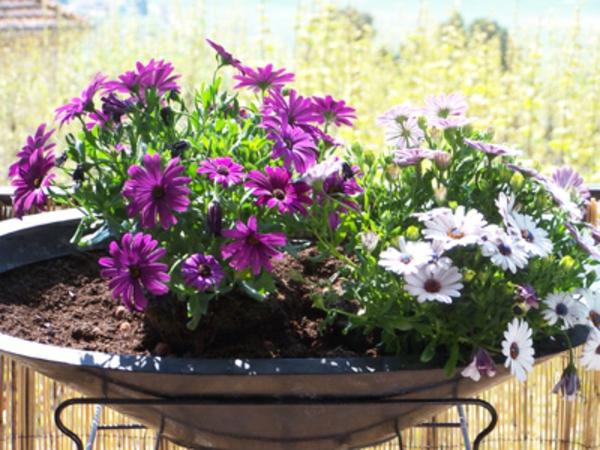 jardiniere2-thumb-400x300-resized