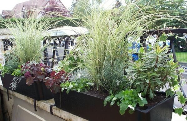 jardiniere_papi_noire_vivaces_et_graminees-resized