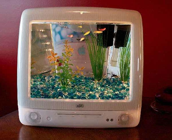 petit-aquarium-design-téléviseur