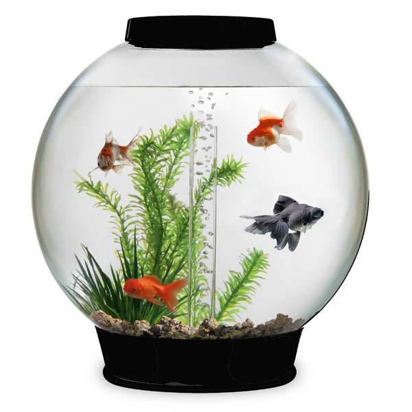 petit-aquarium-design-1rond