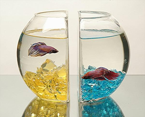 petit-aquarium-design-moitiés