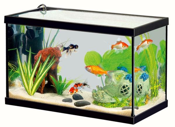 petit-aquarium-design-classique