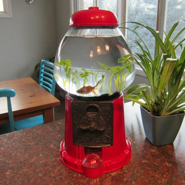 Le petit aquarium design quelques id es mignonnes for Petit aquarium original