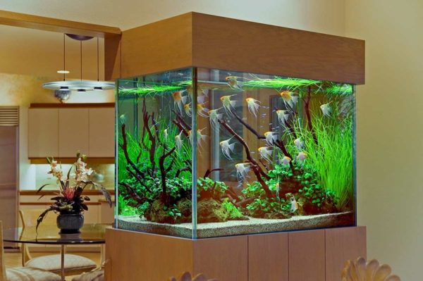 le petit aquarium design quelques idees mignonnes With amazing exemple de decoration de jardin 7 comment decorer son jardin avec des trucs malins archzine fr