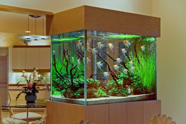 petit-aquarium-design-très-élégant