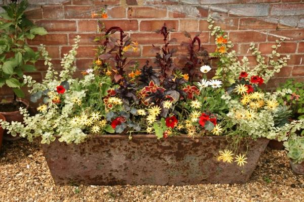 Choisir une plante pour jardini re quelques id es et astuces for Jardiniere d automne