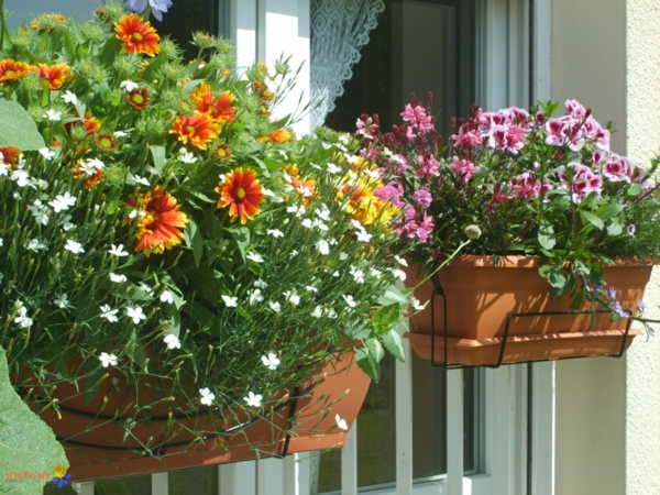 vivaces-et-vivaces-molles-au-balcon-visoflora-13631-resized