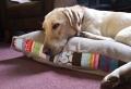 Le coussin pour chien – un confort pour votre ami