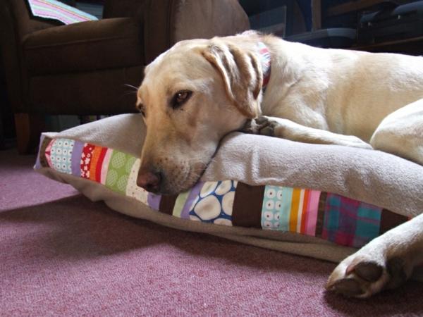 coussin-pour-chien-à-motifs-colorés