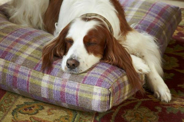 coussin-pour-chien-classique-et-confortable