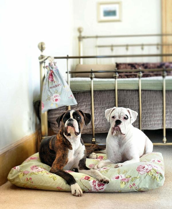 coussin-pour-chien-et-deux-chiens-adorables