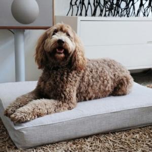 Le coussin pour chien - un confort pour votre ami